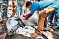 NGOs rush to injured animals' aid