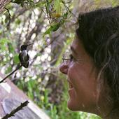 UCLA Researcher Grows Colony of 200-Plus Hummingbirds Outside Her Office