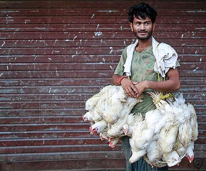 Poultry prices to soften by 20% in six weeks
