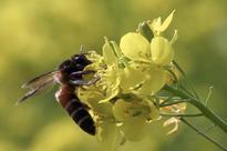 Scientists say virus killing honeybees being spread by human activity