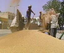 Rise in Temperature Impacting India's Wheat Production: Study