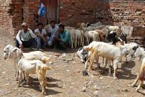 BJP's crackdown on abattoirs spreads, stoking Muslim unease