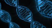 Genetic link found between type 2 diabetes and mental disorders