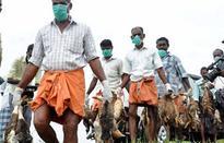 Bird flu: Chandigarh's Sukhna Lake cordoned off