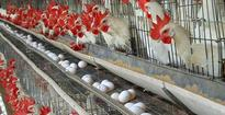 T.N. not to allow Kerala poultry products