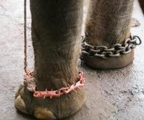 SC notice to Centre and states on welfare of captive elephants