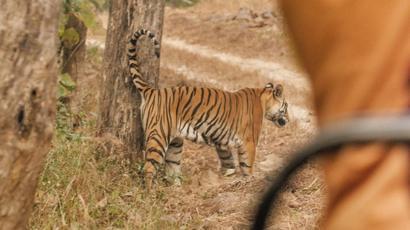 Proteas visit Tiger reserve in Madhya Pradesh