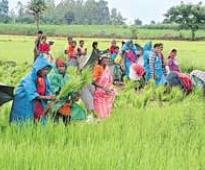 Tenders for Rs 100 crore farmers' health insurance scheme soon