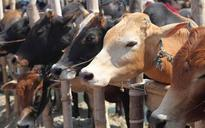 Violence in UP's Mainpuri over rumours of cow slaughter, 21 arrested