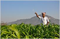 National Fertilizers Q4 net loss at Rs.100.6 crore