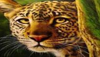Leopard enters Maruti Suzuki plant in Manesar