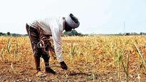 Farm loan waiver: Yogi Adityanath government disburses Rs 7,371 crore for farmers in Uttar Pradesh