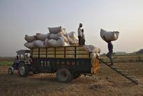 India brings back 10 percent tax on wheat imports