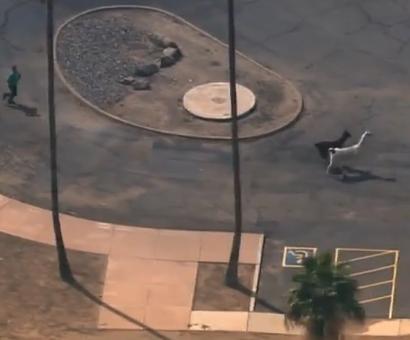 PHOTOS: Llama drama on the streets of Arizona