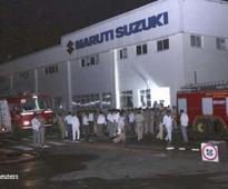 Leopard spotted in Maruti Suzuki plant in Gurgaon; area cordoned off, search launched