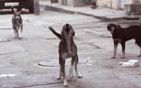 Repeated stray dog attacks create panic among public in Kerala's coastal village