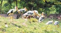 Indira Gandhi zoo, Kambalakonda eco park renovation works to be completed by 2020