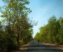 Mattewara forest to be developed as nature reserve