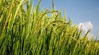 Bumper Listing: Godrej Agrovet ends 29% higher on Day 1