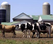 U.S. dairy lobby increases pressure on Canada; NAFTA fight looms