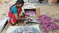 Supreme Court order on firecracker ban expected Monday